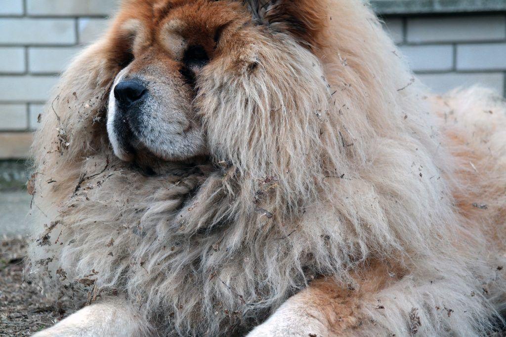 Best NonShedding, Shedding & Least Shed Dog Breeds List