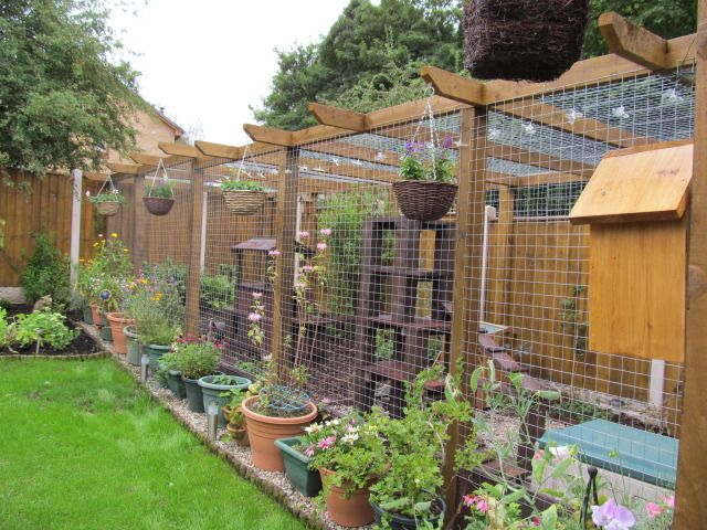 Cat runs cat proofed gardens page 11 pet forums for Indoor gardening with cats
