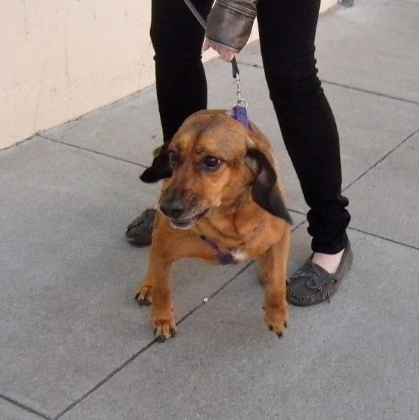 Beagle Bloodhound Mix Puppies Puppies Puppy Dog Pictures