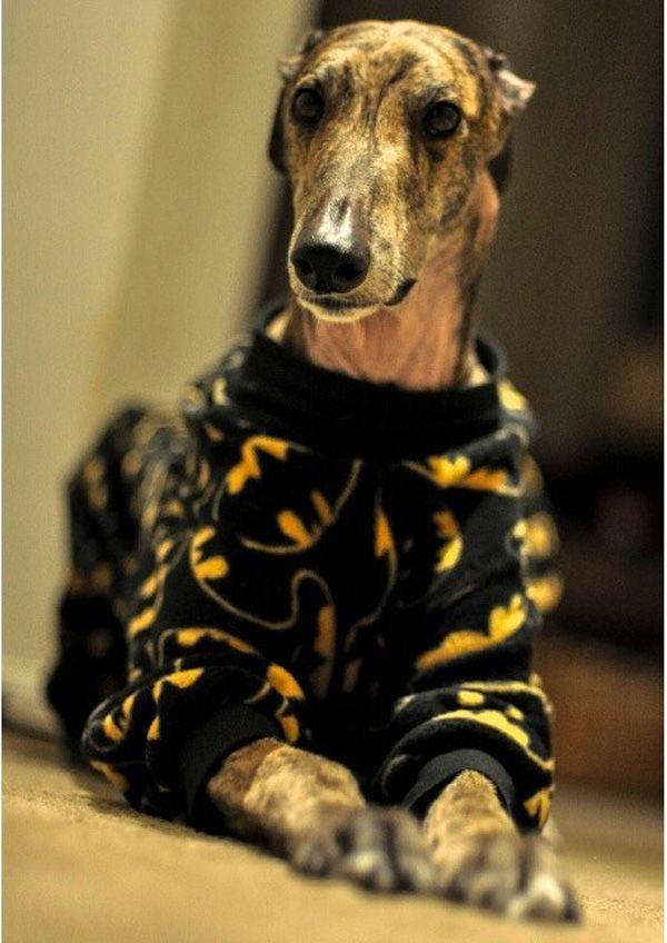 Schlafanzug Hund