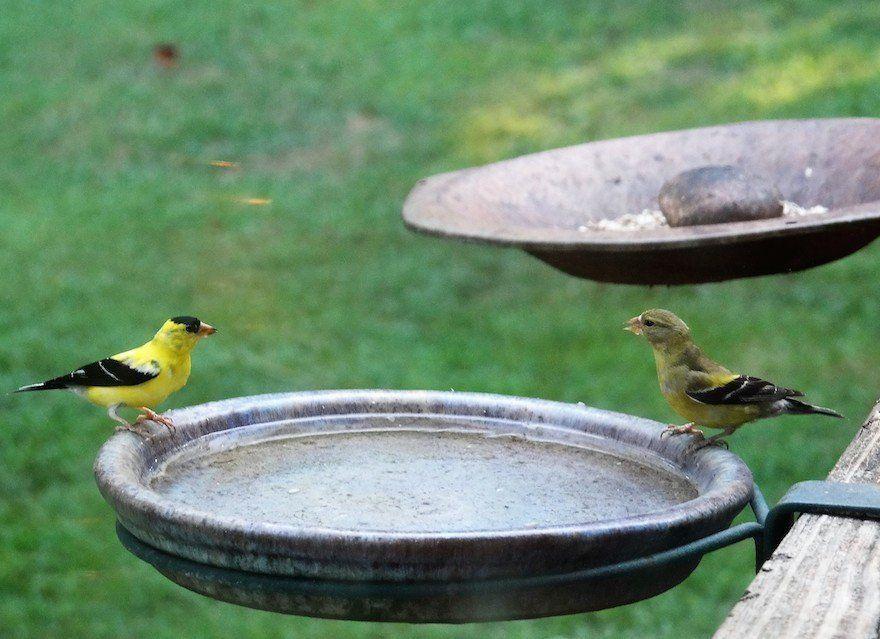 feeder double outdoor hangers metal dp for amazon patio bird all decks hooks weather garden deck com wall pack pennington