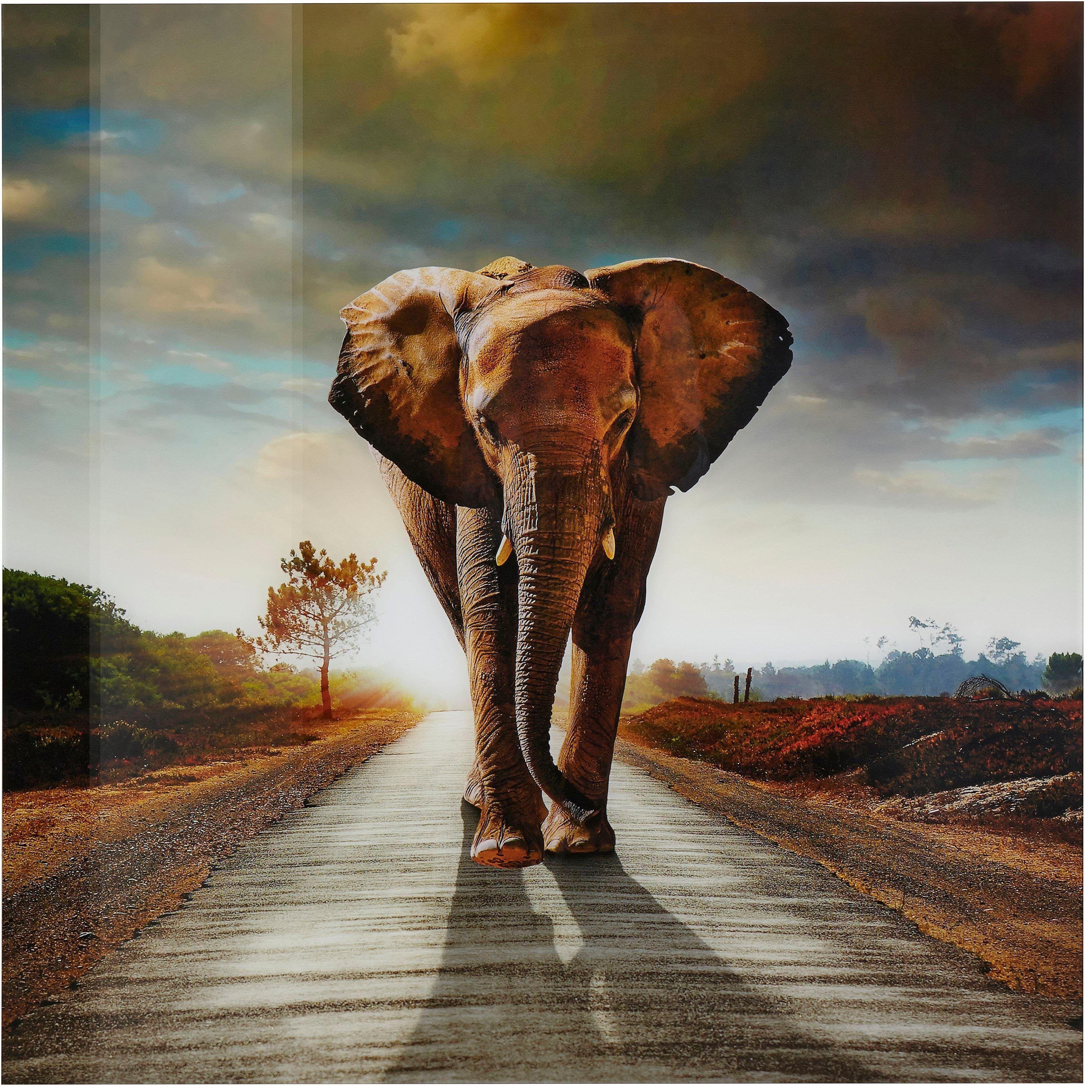 Premium collection by Home affaire Glasbild »Elefant« bunt Jetzt ...