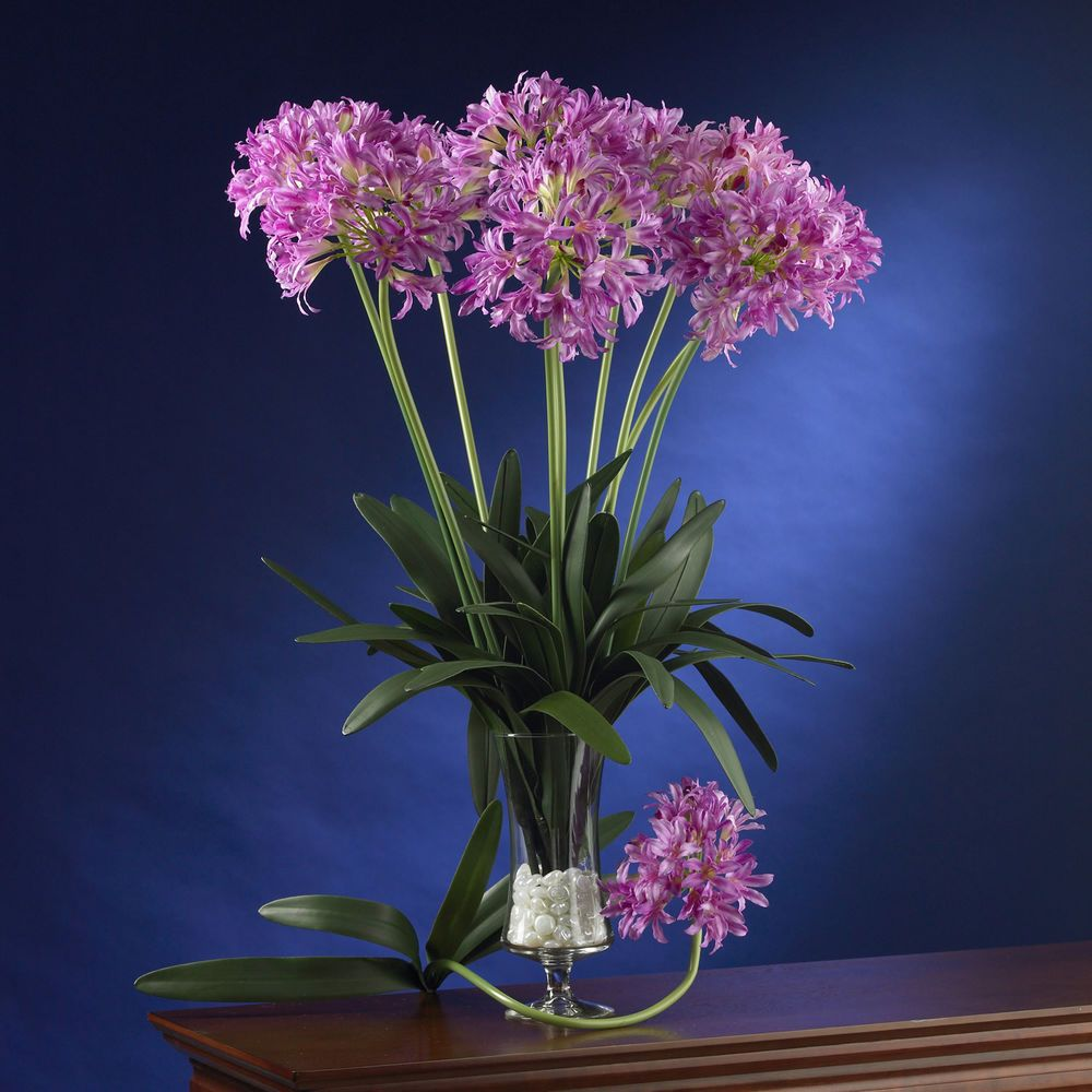 """29"""" African Lily Stem (Set of 12) Nearly Natural Purple"""