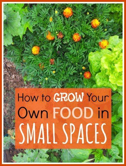 How to Grow Your Own Food in Small Spaces | The Urban Ecolife
