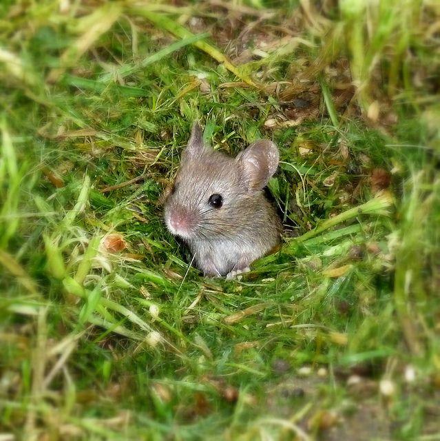 Ikkle Mouse Explored Kleine Maus Feinde Und Aussicht T
