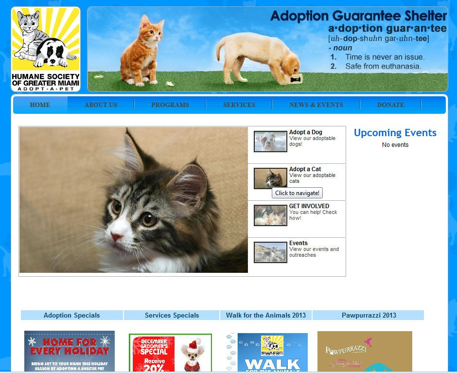 Volunteer At The Humane Society Of Greater Miami Humane Society Cat Adoption Dog Adoption