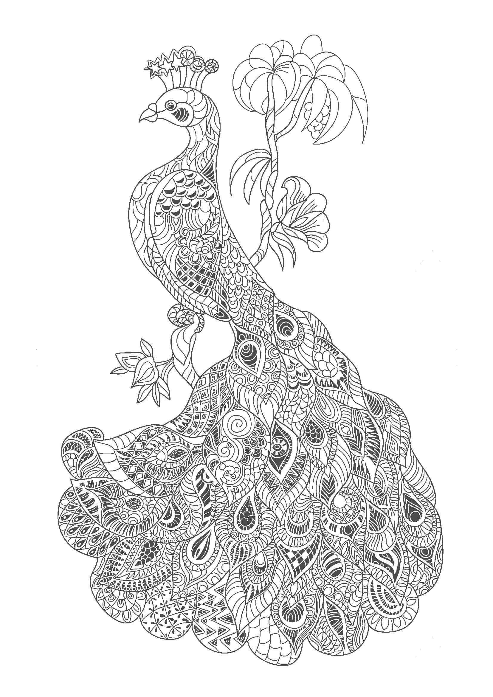 Otonanonurie Bird02 Jpg 1 654 2 339ピクセル 塗り絵 無料 塗り絵 塗り絵 無料 花