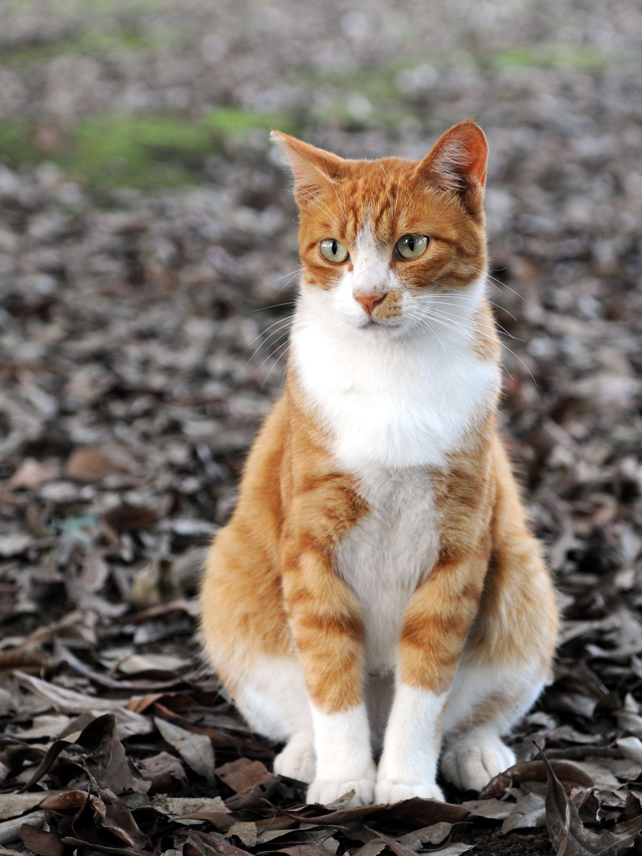 Shard by Elena Carey Orange tabby cats, Tabby cat, Cute cats