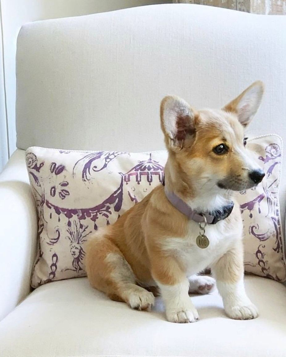 Pin by Dina Cleveland on puppups (With images