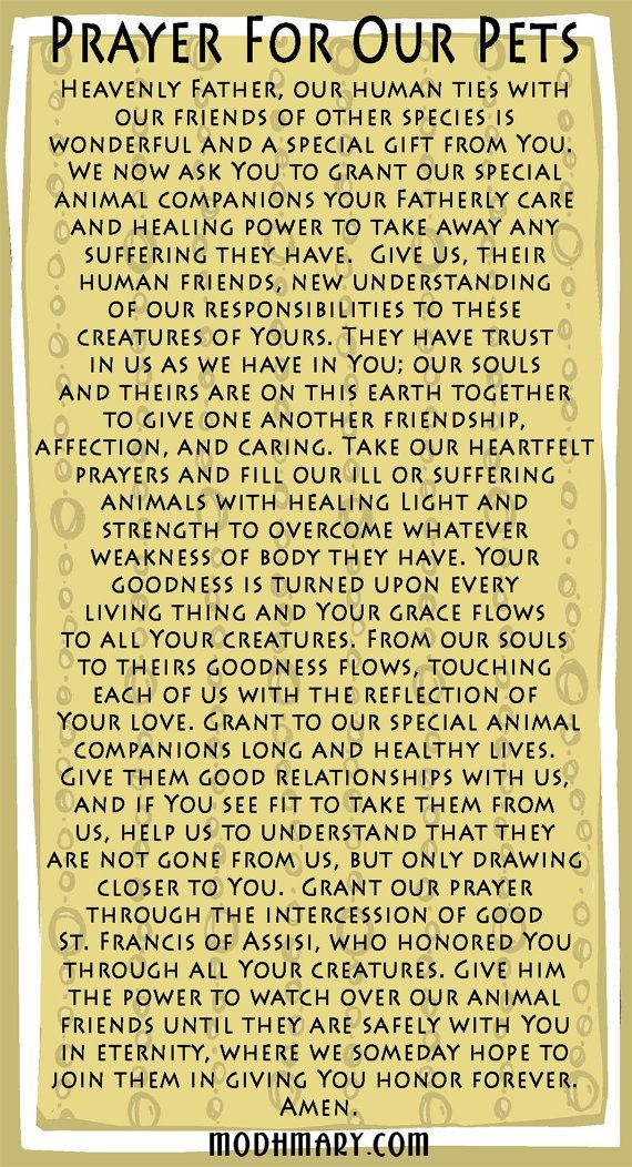 St. Francis of Assisi Prayer Card for Pets Prayers, Pets