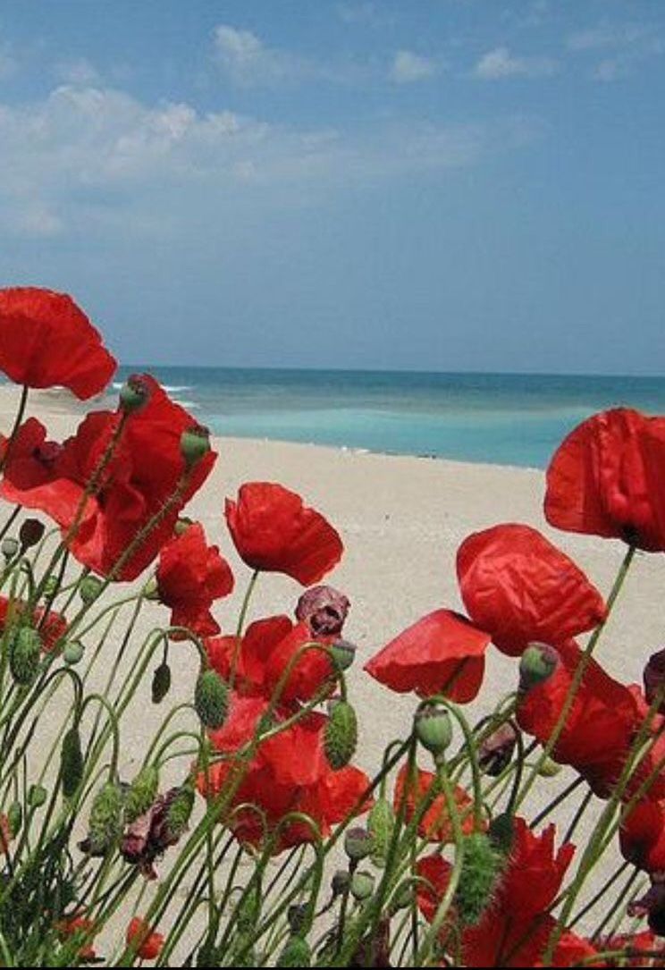 Poppies Black Sea | Pittura floreale, Papaveri, Fotografia