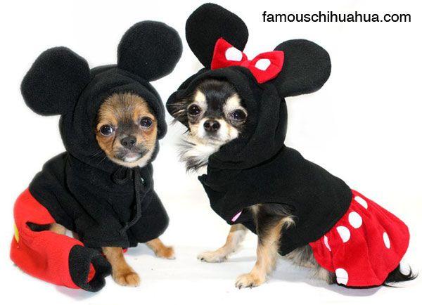 dog - Pet Halloween Photo Contest