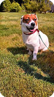 Pin By Vicki Kay On Adopt Me Pets Corgi Mix Adoptable Beagle