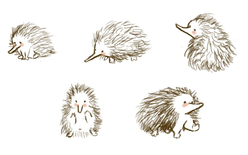 E Is For Echidna Echidna Easy Drawings Native Art