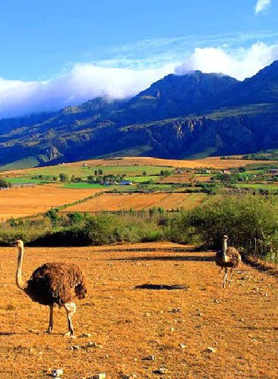 Chutes Victoria: What To See And Do Along The Garden Route And Little Karoo