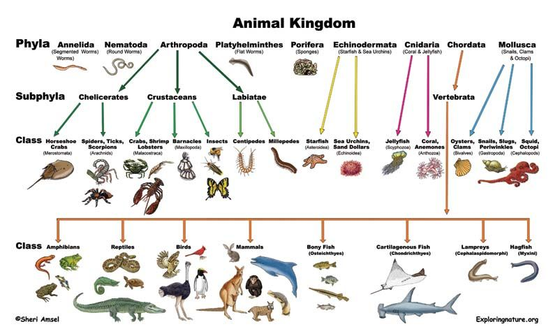 11++ Animal classification for kids ideas