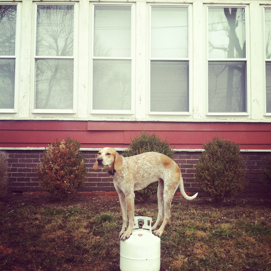 Maddie is a coonhound who stands on everything imaginable...even mailboxes!