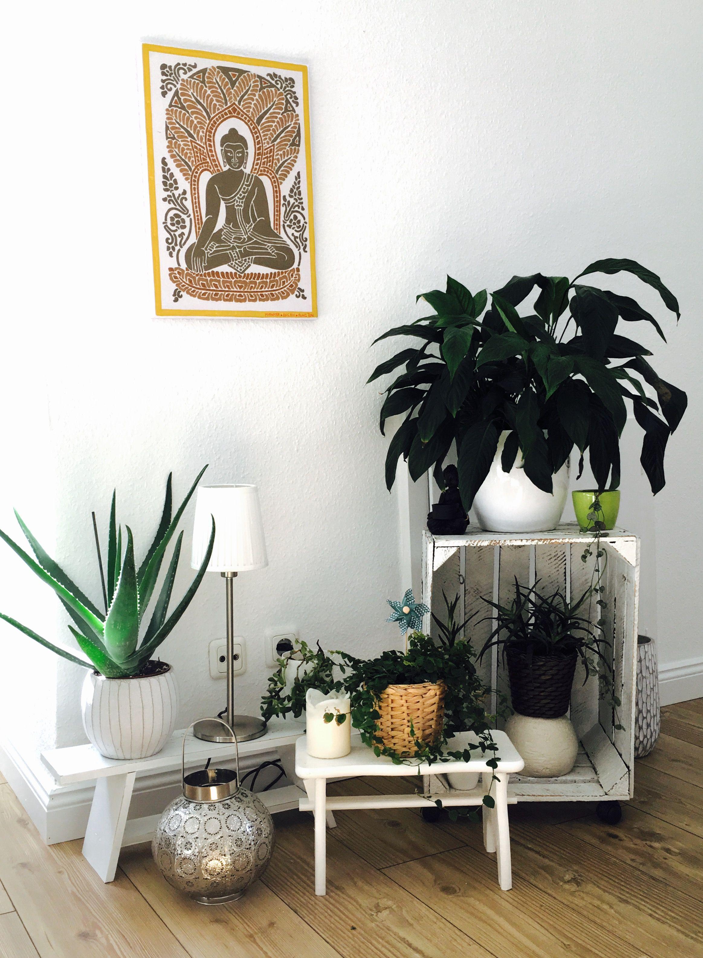 Kleine Grne Oase Pflanzen Wohnzimmer Bepflanzung Zimmerpflanzen Anordnen Ideen