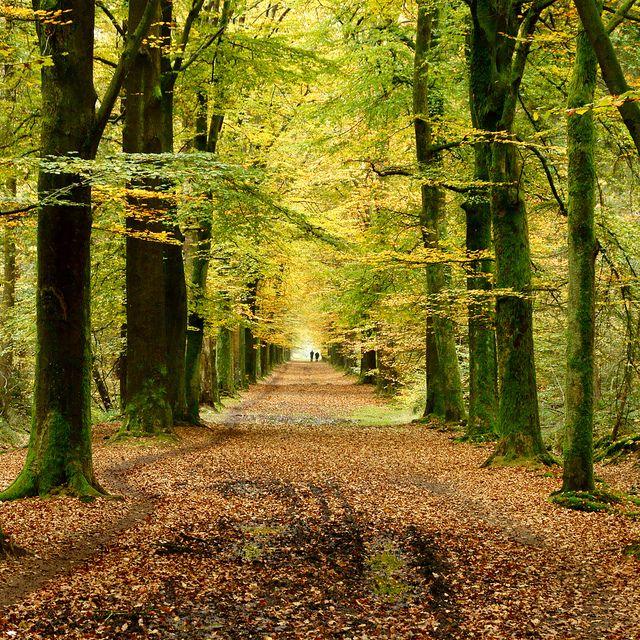autumn walk | Flickr - Photo Sharing!