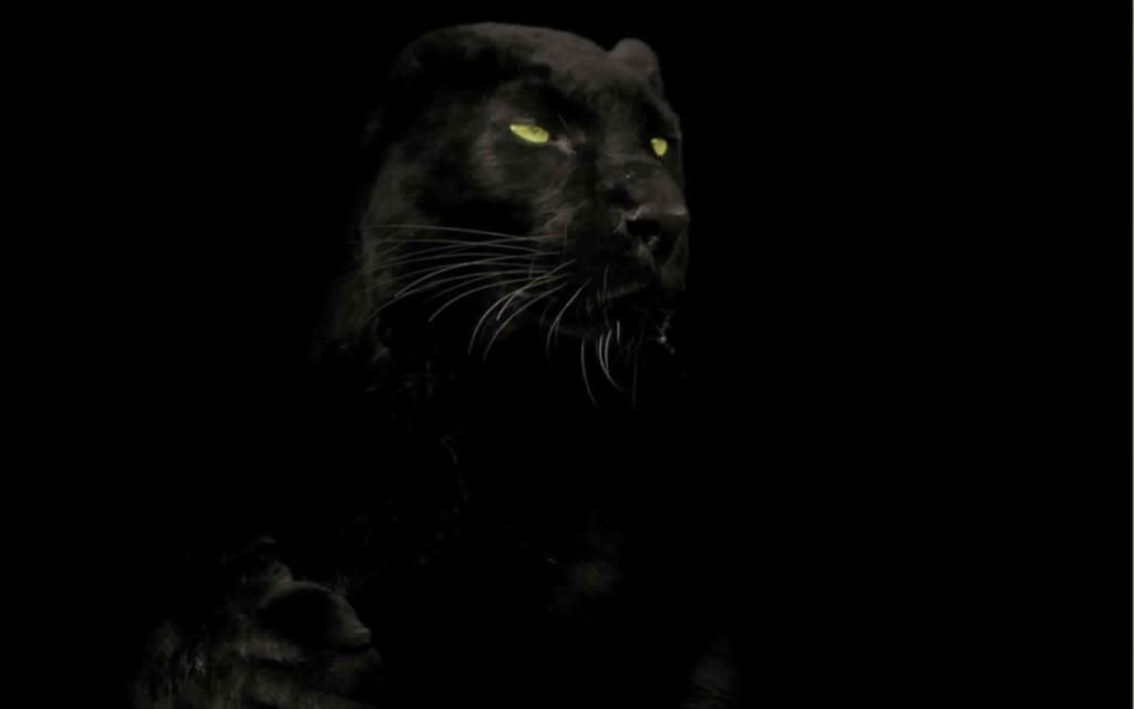 Black panther screensaver - Black screensaver ...