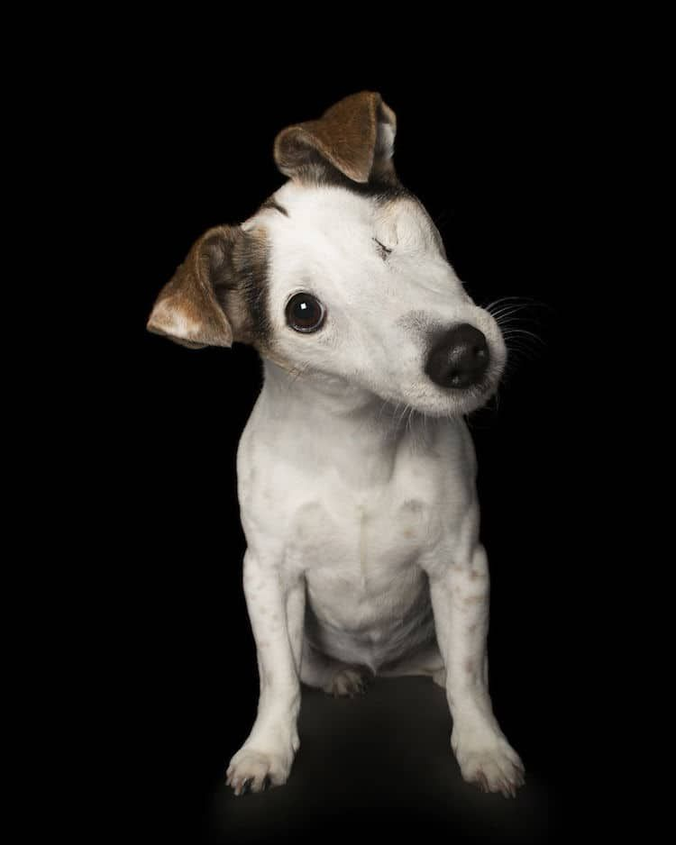 Photographer Captures The Perfect Imperfections Of Adorable Rescue Dogs Disabled Dog Cute Animals Dogs