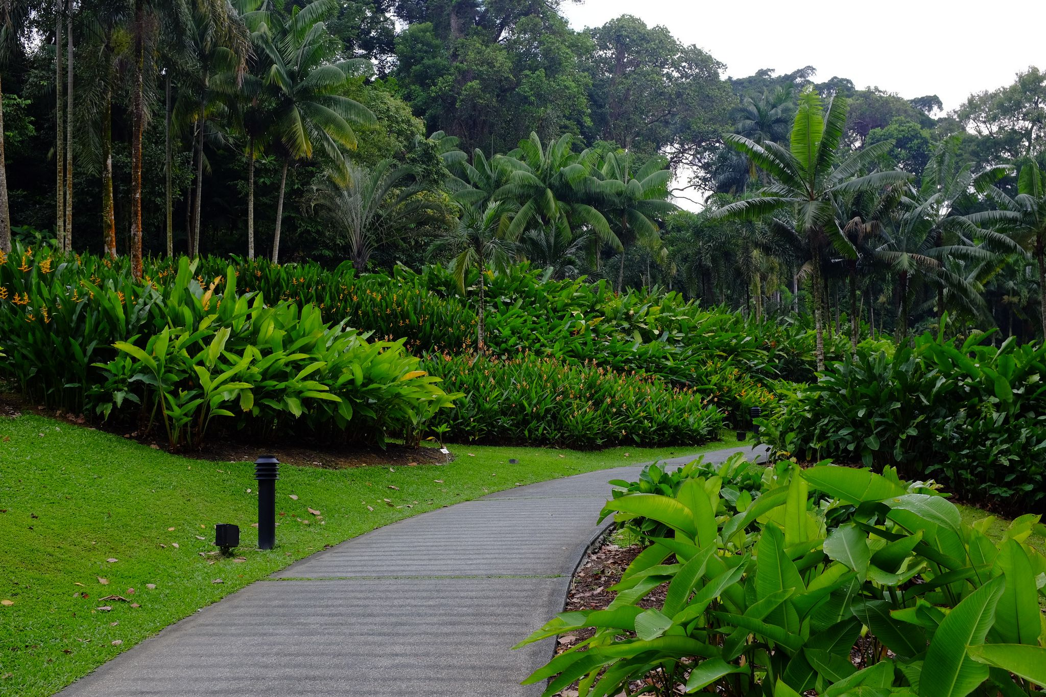 Mass Planting Of Heliconias (Mostly Psittacorum)
