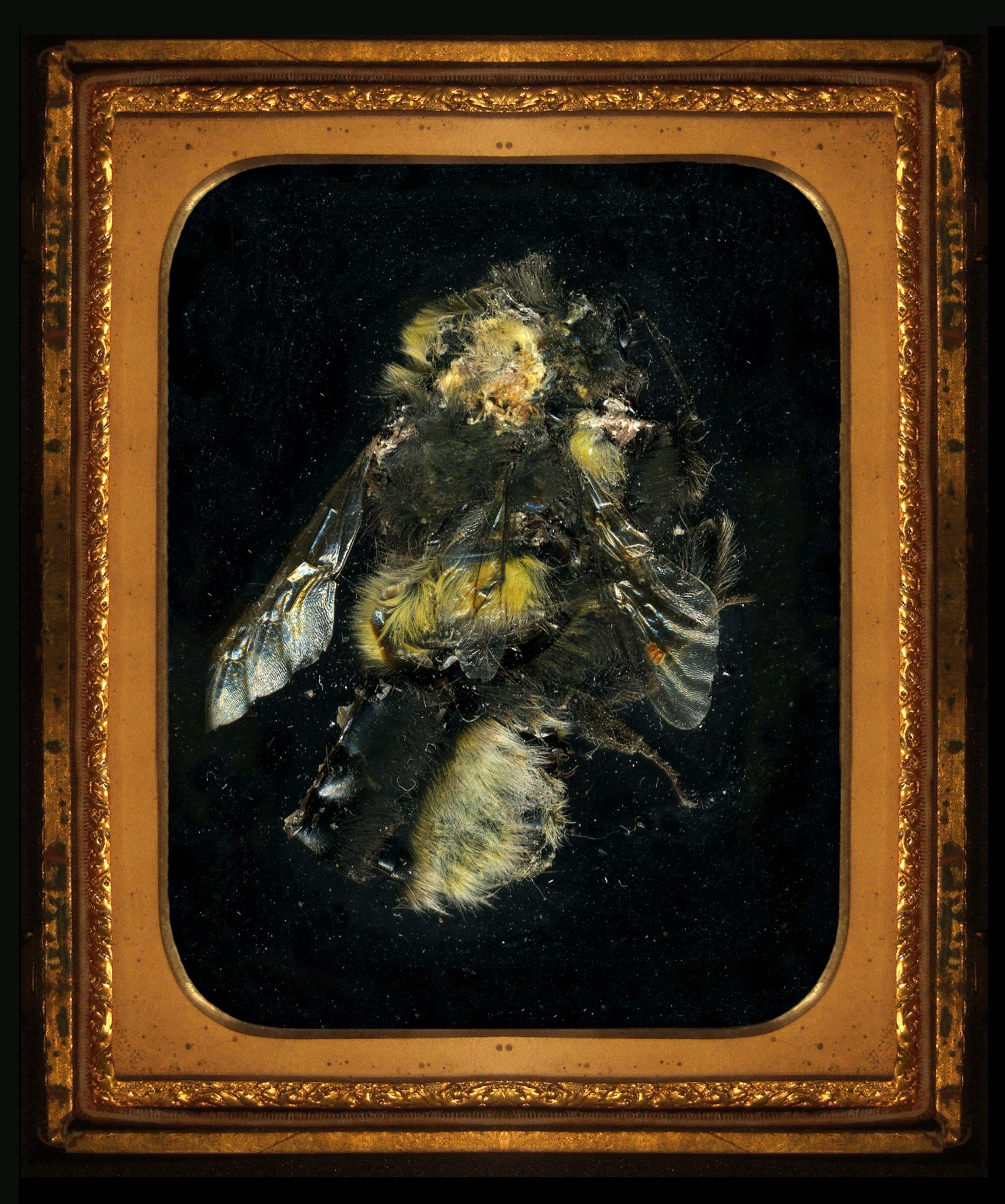 Matt Collishaw | art, curiosities, oddities, insects, entomology, memento mori