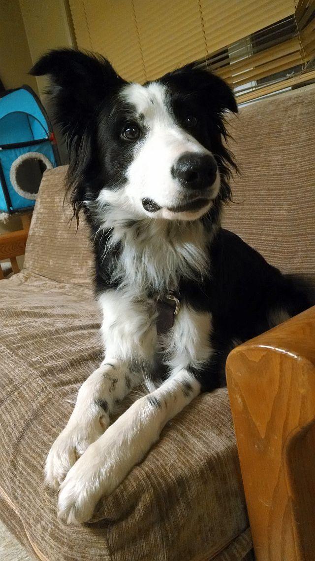 Adopt Danni On Dogs Puppies Animals