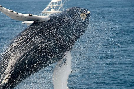 Walbeobachtung mit SK Touristik #whale