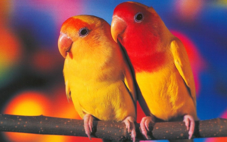 cool birds hd image amazingpict com wallpapers pinterest