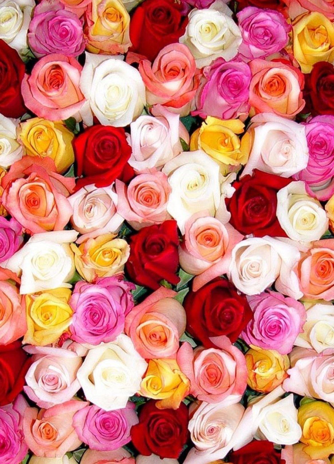 Pin By Samim Hirani Hojatti On Flowers Flower Phone Wallpaper