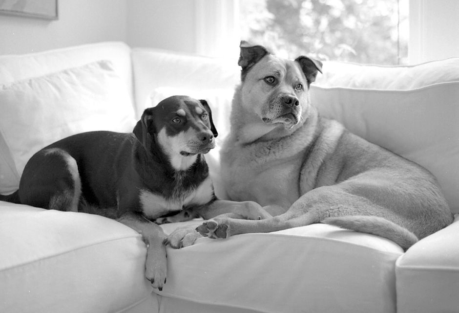 Buddies In Black And White By San Francisco Photographer Jesse