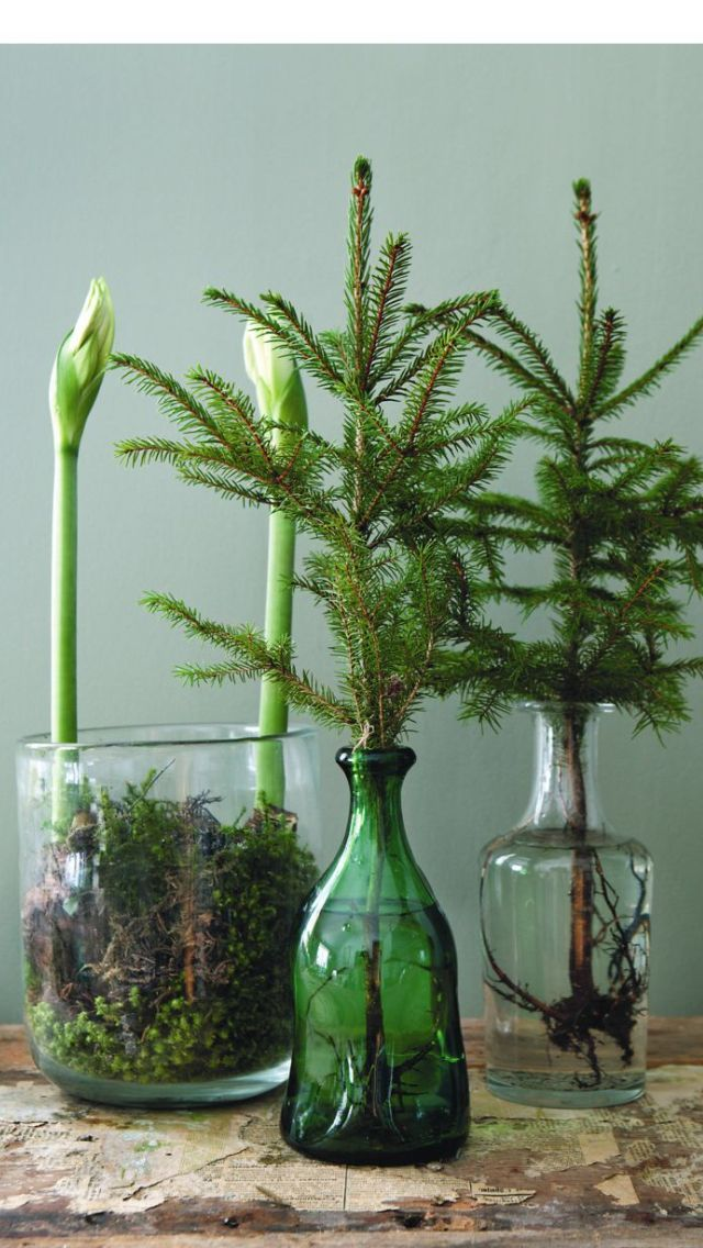 Christmas: Green vase with greenery #amaryllisdeko Christmas: Green vase with greenery #amaryllisdeko