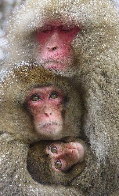 coole apen