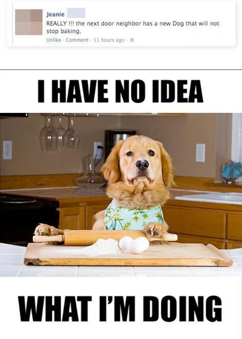 The Dog Won T Stop Baking With Images Laugh Funny Pictures Lol