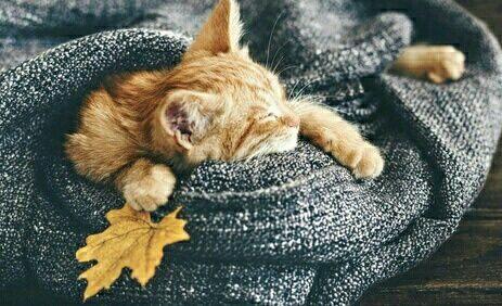 Immagine di cat, autumn, and fall