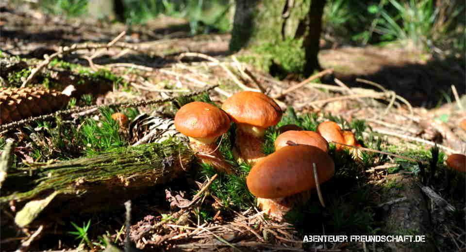 11 Essentielle Basics Furs Pilze Sammeln Die Du Wissen Musst Pilze Sammeln Pilze Essbare Pilze