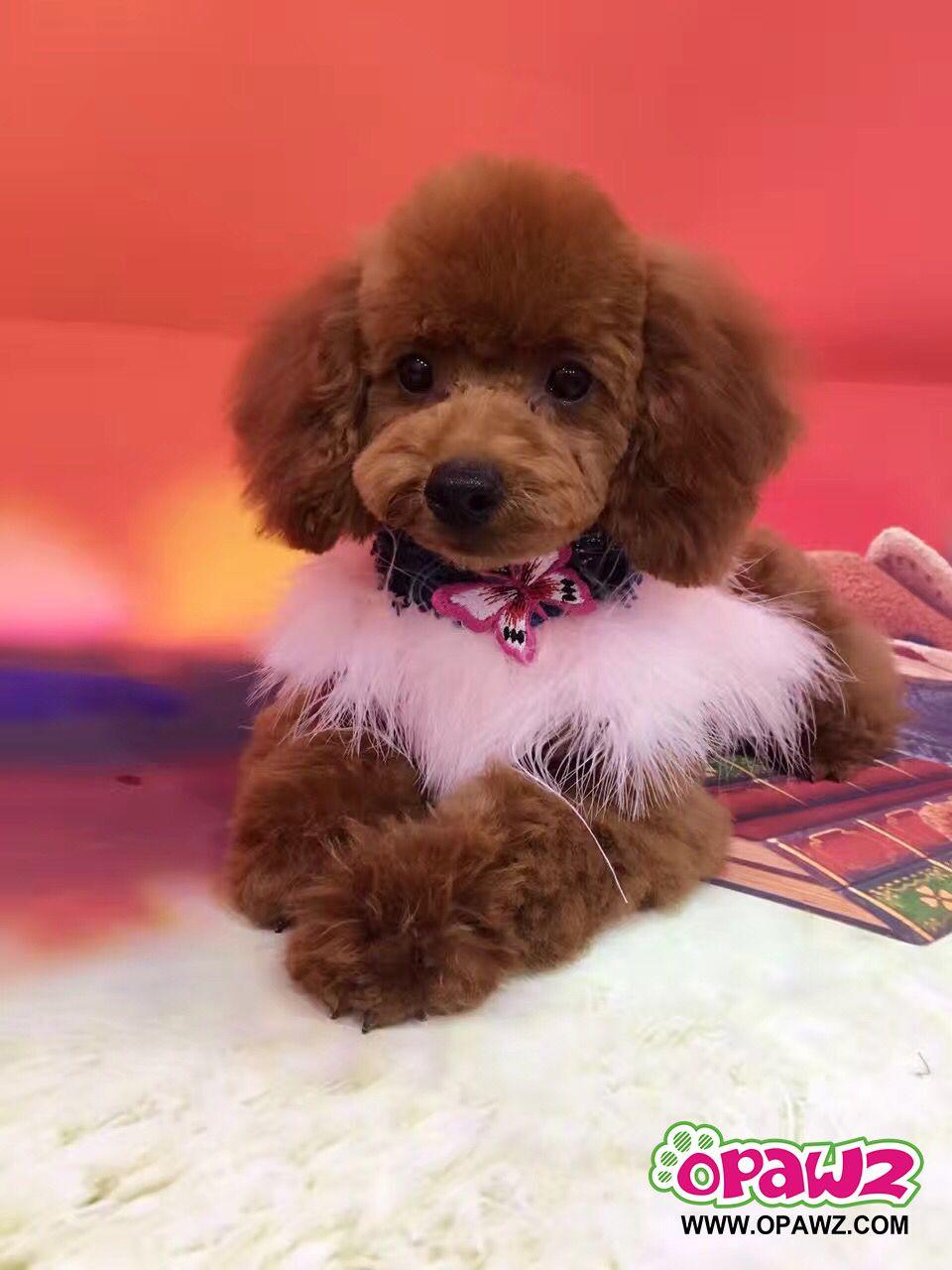 Opawz Pink Feather Collar For Dog Pet Collar Pet Fashion
