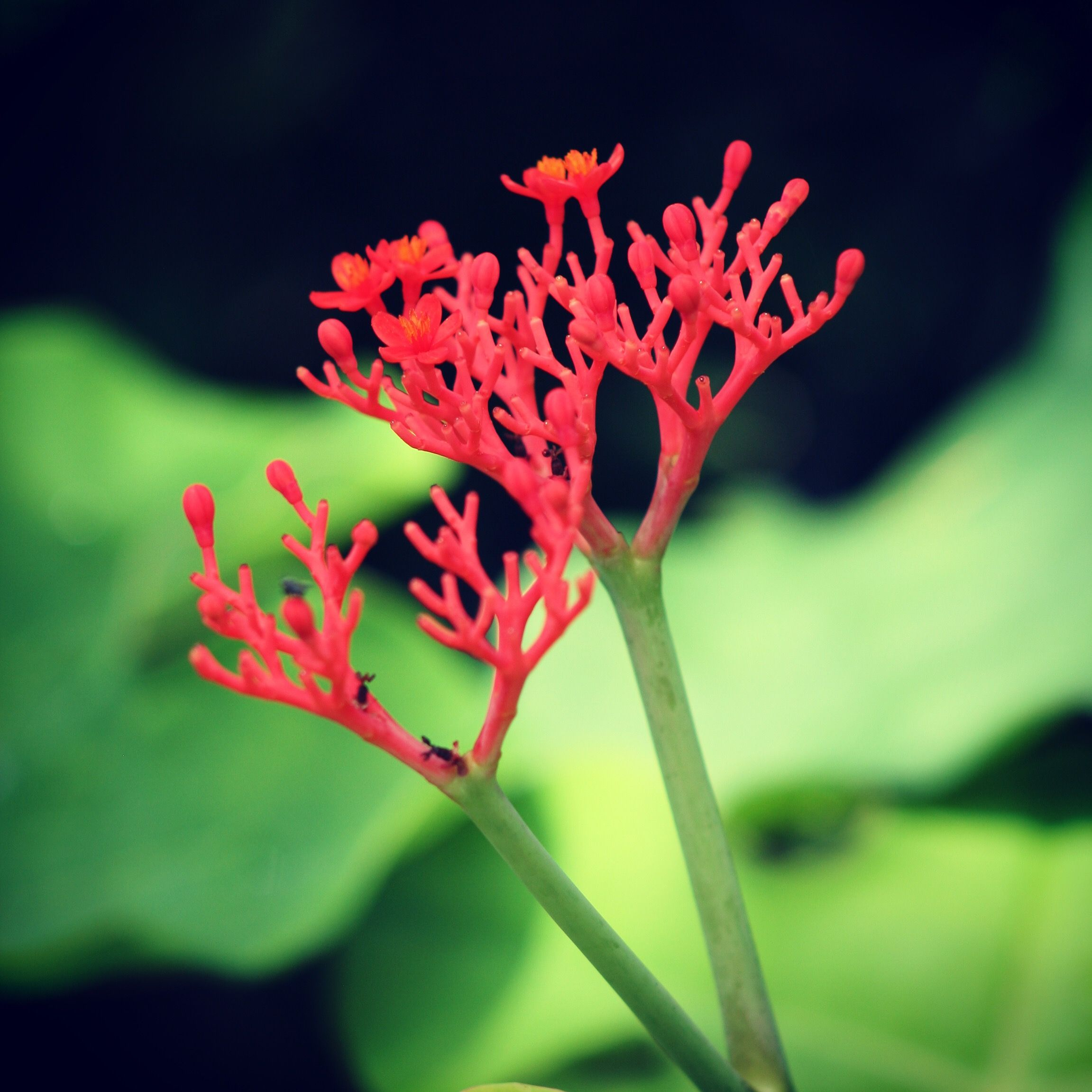 This amazing coral looking flower come from the BUDDHA