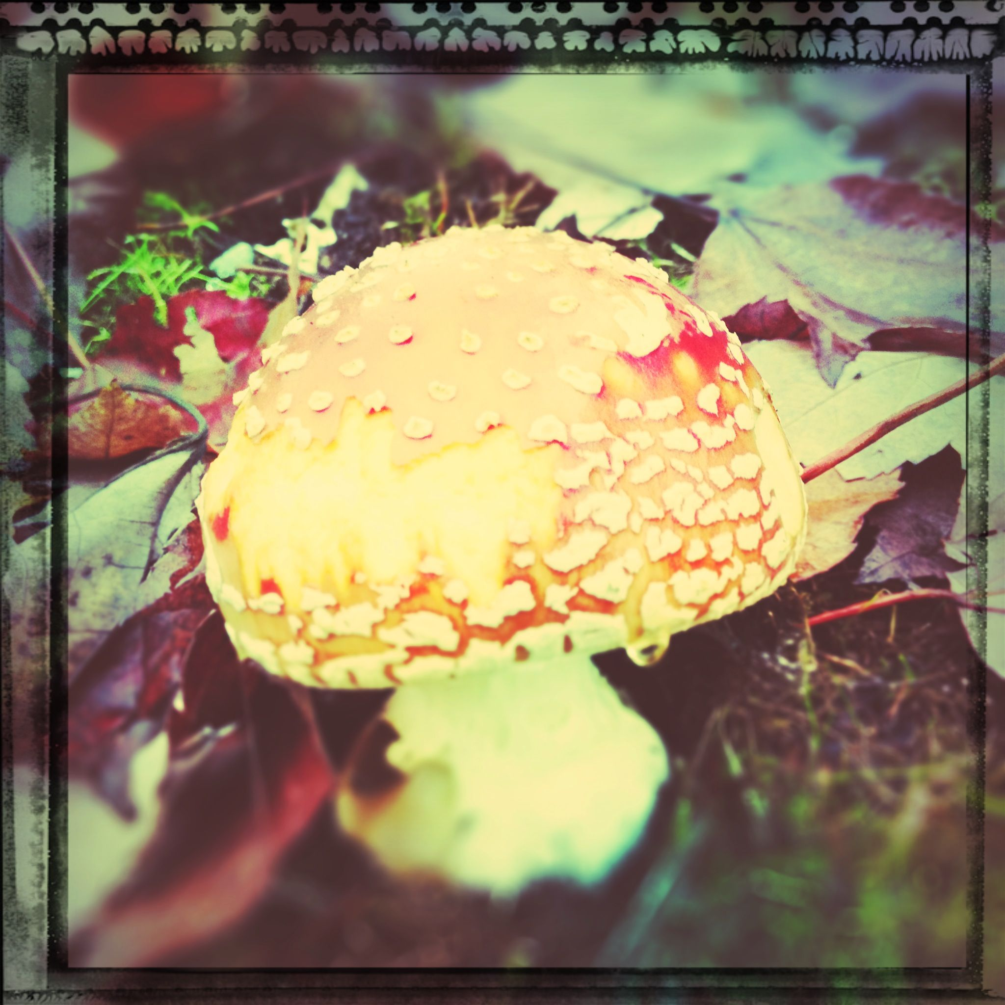 Used my tadaa app for this awesome mushroom pic.