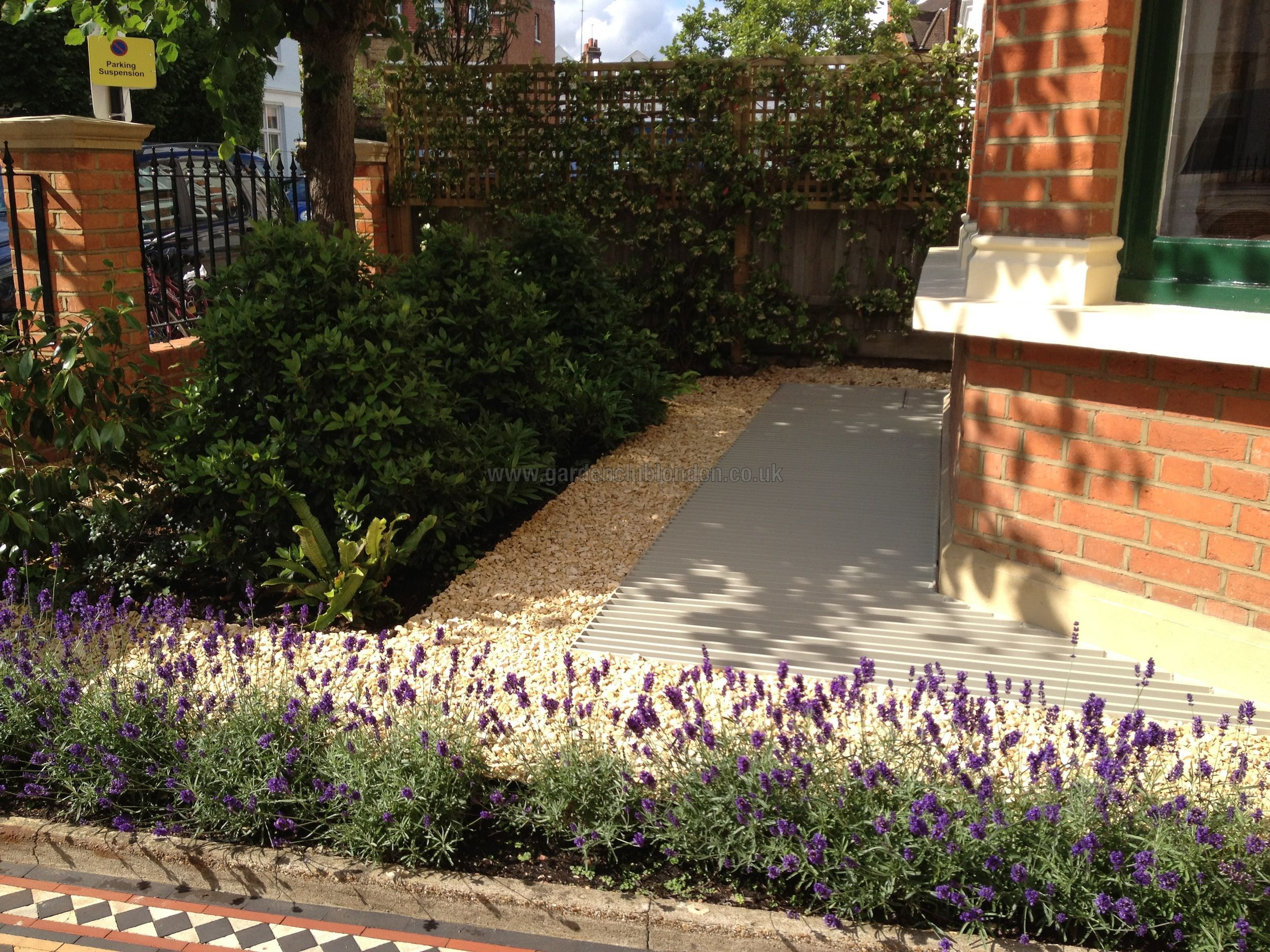Lavender Hidcote planted to form a small hedge in a front garden