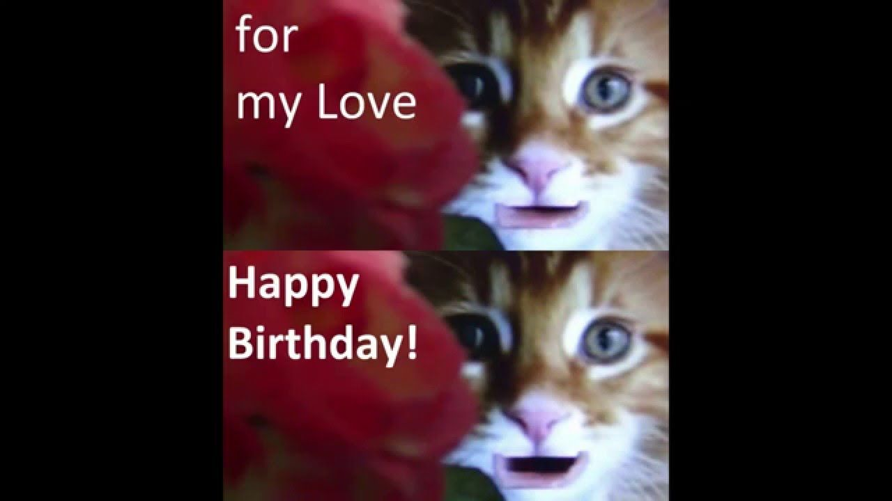 happy birthday my love from cute cats funny cat videos cute
