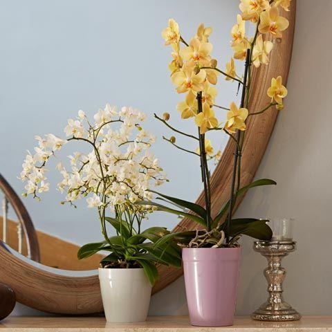 m mo entretien de vos orchid es les orchid es ont besoins de beaucoup de lumi re l id al est. Black Bedroom Furniture Sets. Home Design Ideas
