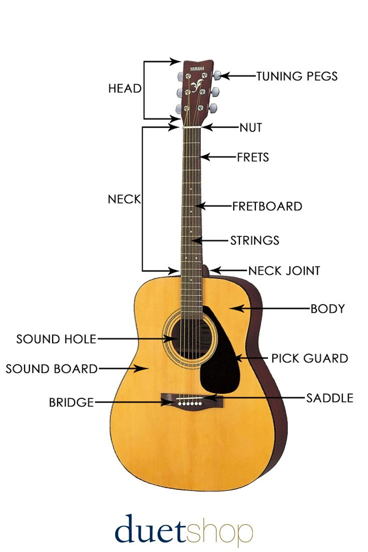 The Anatomy of the Acoustic Guitar | Acoustic guitar, Acoustic and ...
