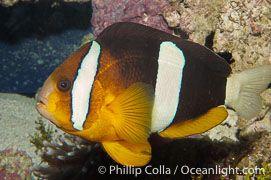 List Of Fish Species Fish Photos Em 2020