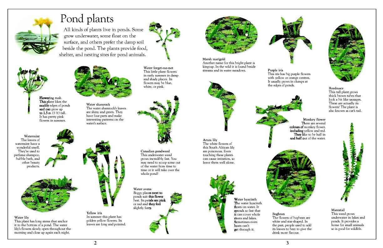 Ponds plants natura y agua pinterest pond plants for Plants to put in pond