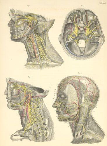 Pin On Vintage Medical Illustration