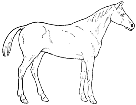 How To Draw Horses With Easy Step By Step Drawing Lessons