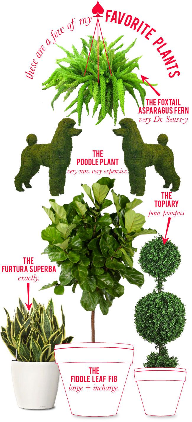 cool plants to have