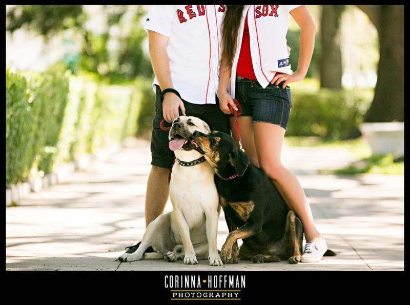 Craigslist Florida Pets Jacksonville   Pets Animals US